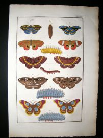 Albertus Seba C1750 Folio Hand Coloured Antique Print. Butterflies 22